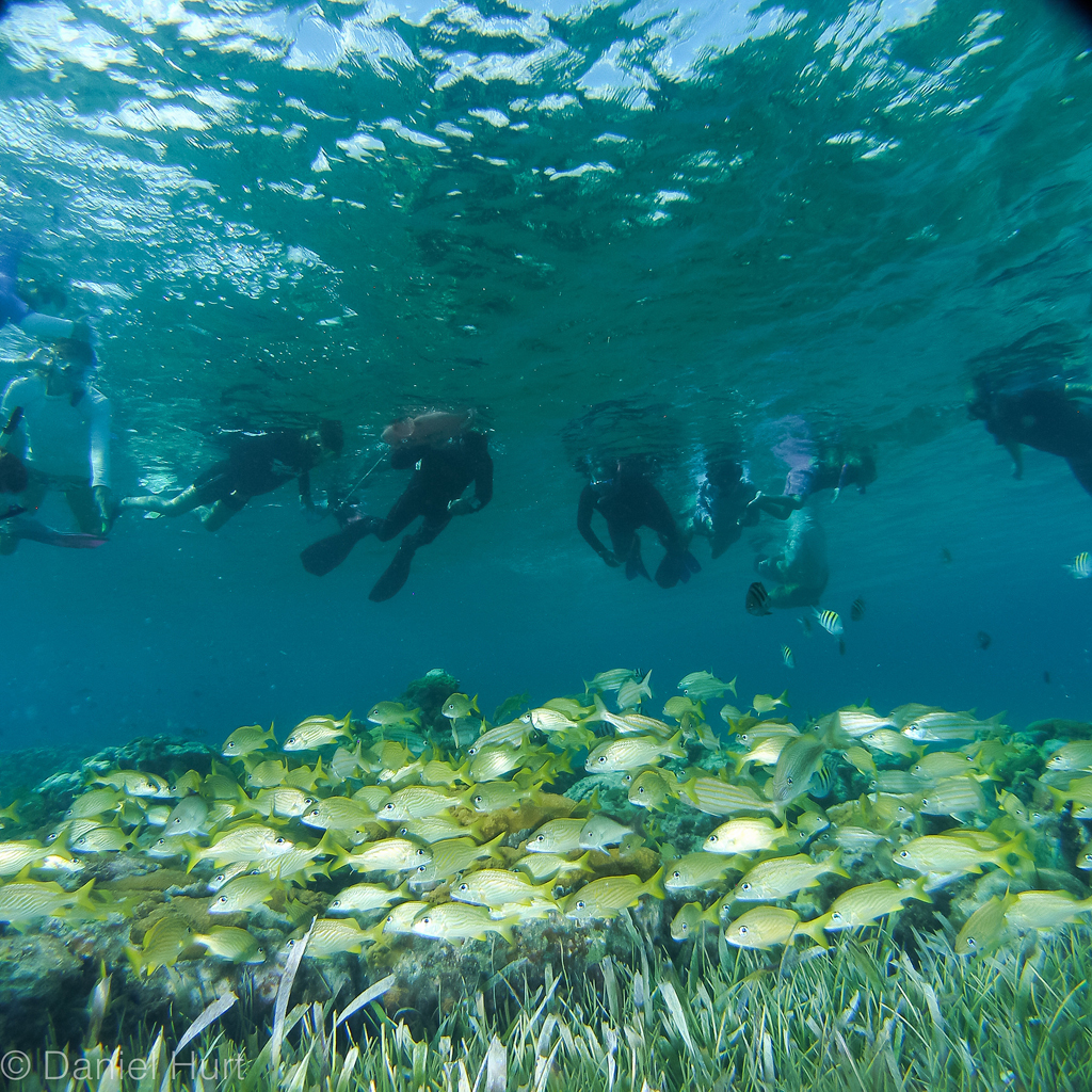 La Herradura-buceo-Isla Cozumel