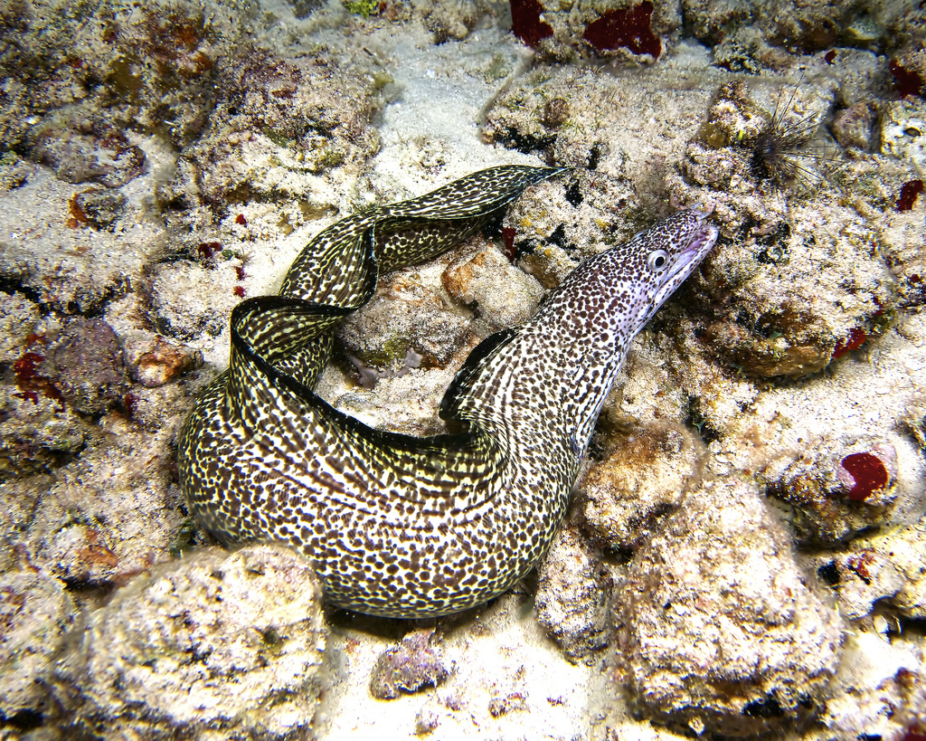 Paraiso-buceo-Isla Cozumel